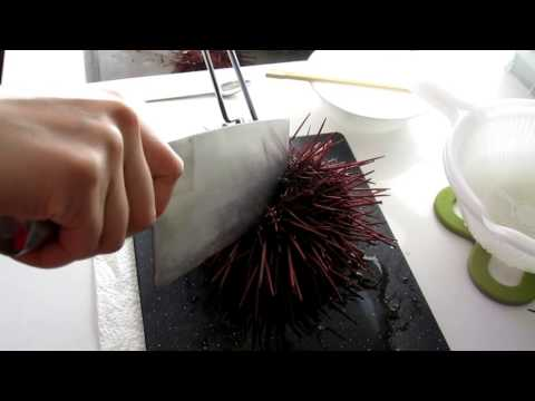 How to open sea urchin the correct way (or not) 開海膽