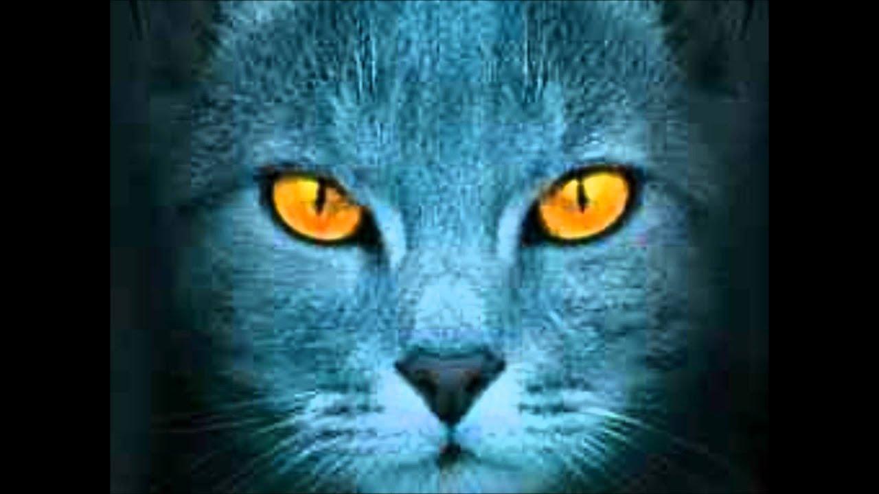 Prolog Von Warrior Cats