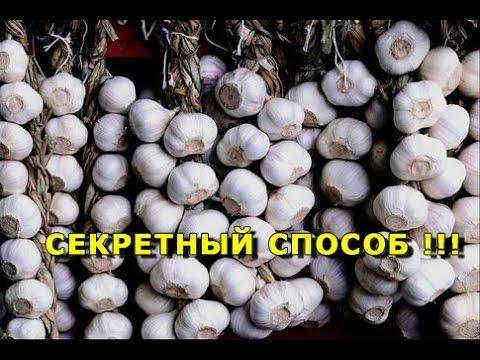 КОГДА САЖАТЬ ЯРОВОЙ ЧЕСНОК ВЕСНОЙ/ Раскрою секреты большого урожая / WHEN DRINKING GARLIC SPRING