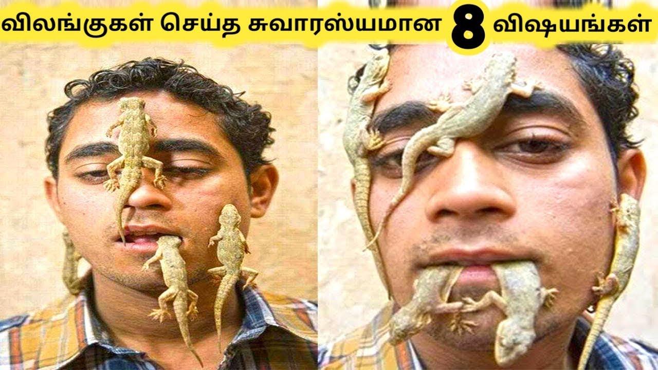 ஆச்சரியமான விலங்குகள் || Eight Animal Surprised Humans Part 4 || Tamil Galatta News