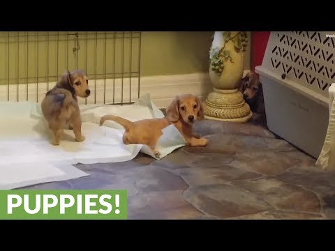 What happens when puppies find their voices?