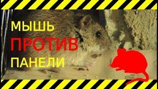 Дом из соломы и мыши