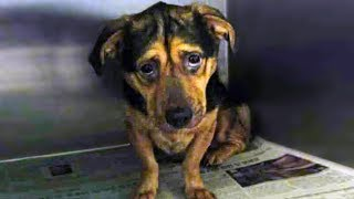 shelter-stops-woman-from-adopting-saddest-dog-but-she-refuses-to-leave-without-him