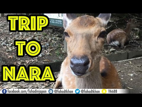 Trip to Nara VLOG! Polite Deer, Todai-ji, Horyu-ji, Food, and More!