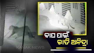 Caught On Camera: Leopard Strays Into Residential Area In Bhubaneswar