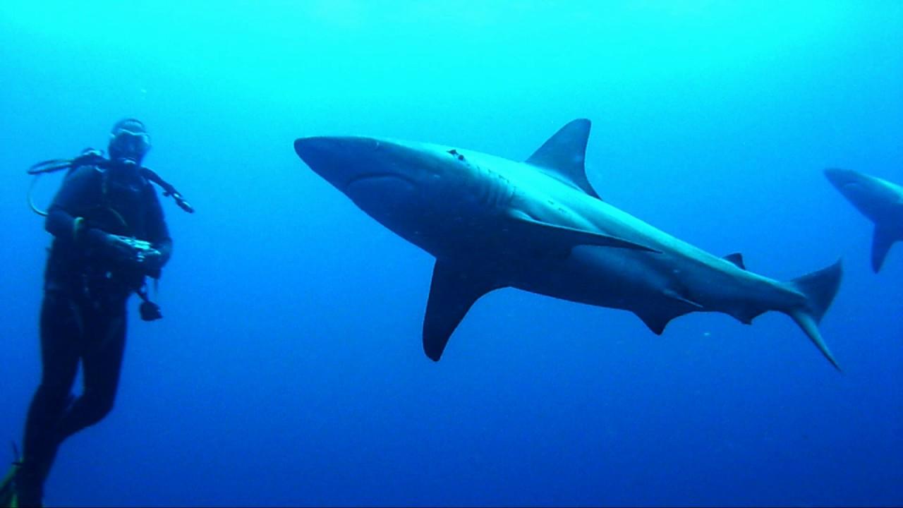 Afbeeldingsresultaat voor protea banks dive