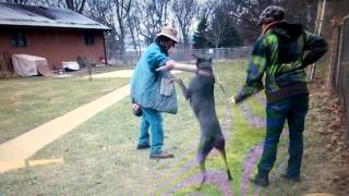 Ava Bark And Hold Allie Dog Training