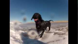 Labrador Retriever  Swimming In The Ocean (very Cute)