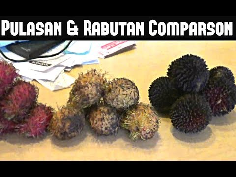 Pulasan, Red & Yellow Rambutan Comparison - Weird Fruit Explorer Ep. 39