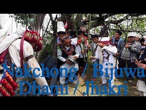 Sakenwa साकेन्वा/साकेला  थानमा Nakchhong बिजुवाले कसरि पुज्छन प्रकिति र पुर्खाहरुलाई हेर्नुस |