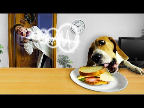 Вопрос: Как успокоить собаку во время фейерверка?