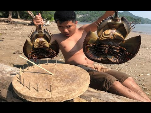 Primitive Technology: sundial and survive a day at the seashore wilderness