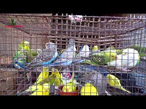 GALIFF STREET BIRD MARKET KOLKATA INDIA | 20TH JAN 2019 VISIT | BIRD PRICE