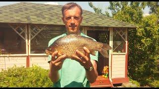 Карась-гигант из небольшого пруда: все подробности удивительной рыбалки!
