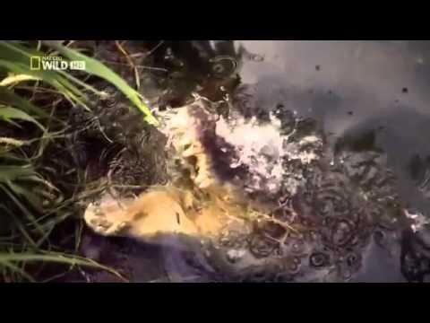 Die Giftigsten Tiere Der Welt Doku Achtung, Extrem Giftig! 2013 german Deutsch