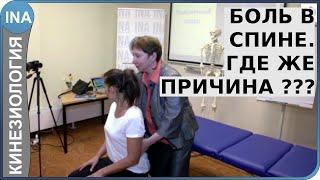 Боль в спине. Где же причина? Обучение кинезиологии в Германии