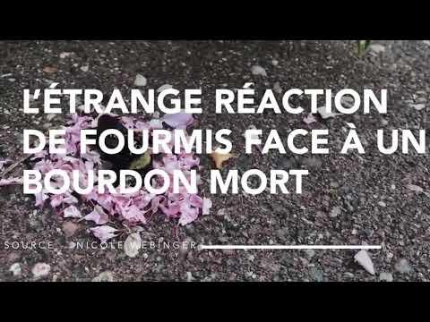 Une Etrange Video Montre Des Fourmis Apporter Des Petales De Fleurs