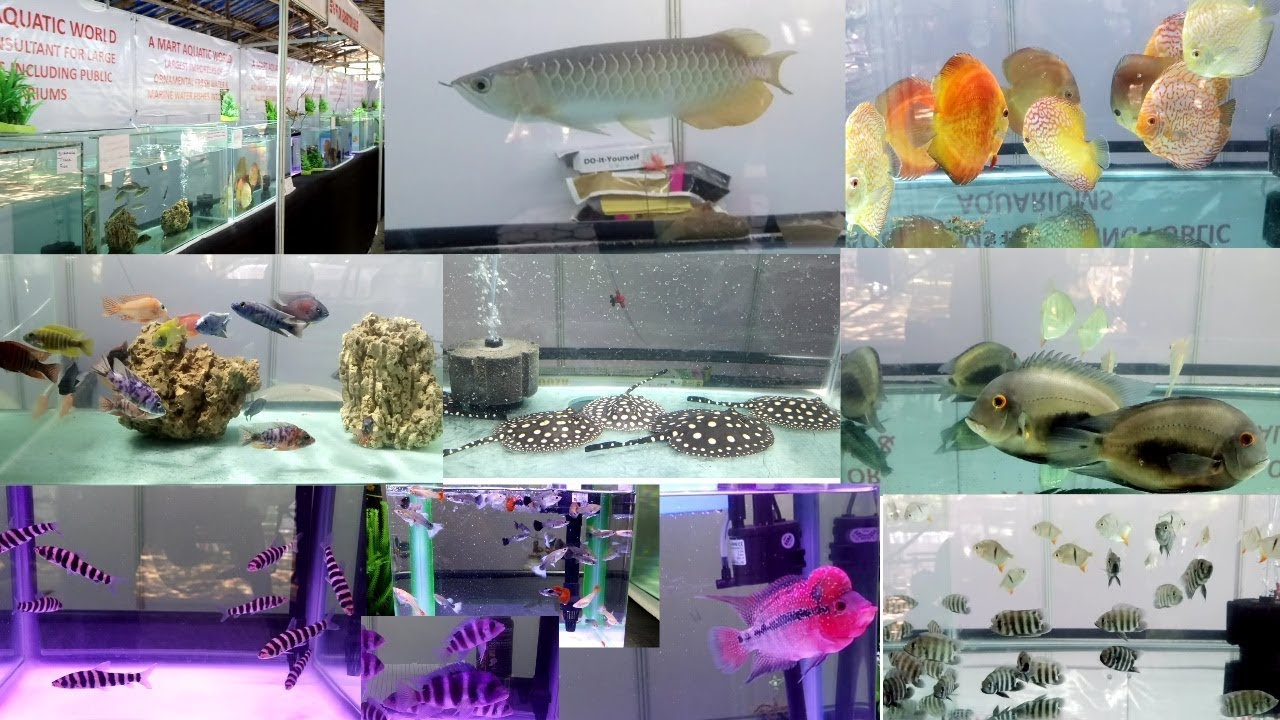 WORLD OF PETS AMART AQUATIC WORLD AQUARIUM EXHIBITION AT MUMBAI, INDIA