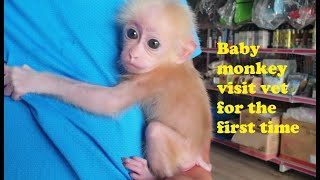 Baby Monkey Visits Vet For The First Time | Monkey Doo