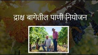 shrihari ghumare | द्राक्ष बागेतील पाणी नियोजन  भाग 1