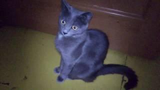 Кошка никогда не допустит, чтобы ее увидели в нефотогеничной позе.