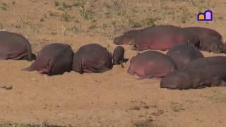 South Africa - Kruger National Park - Northern section