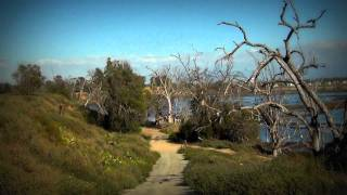 Bolsa Chica Wetlands in Huntington Beach, California | By Aloha Robert (USA)