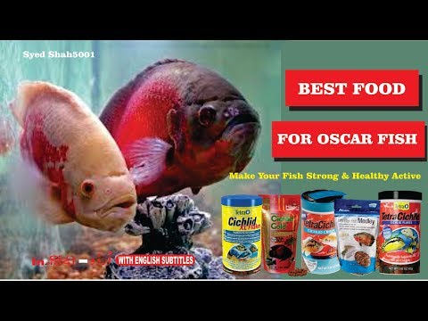 Best Food For Oscar Fish For Grow Fast Active & Dark Colour Hindi English Sub