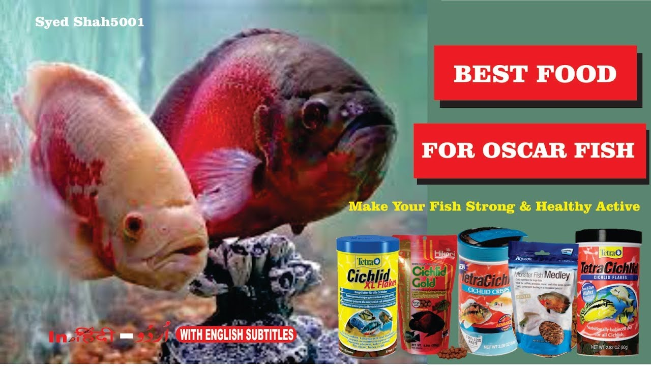 Best Food For Oscar Fish for grow fast Active & Dark colour Hindi ...