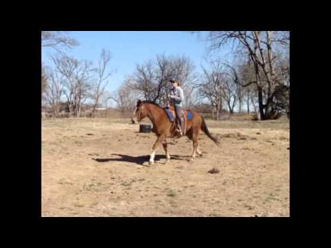 SORREL RANCH HORSE