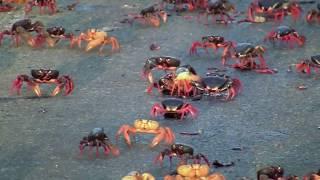 Crossroad SpyCrab Migration