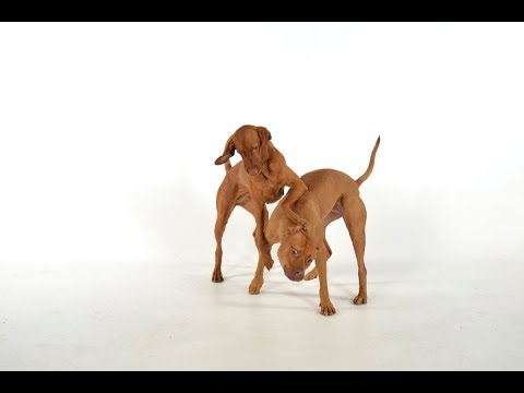 kissing dogs! A dog trick in ONE minute
