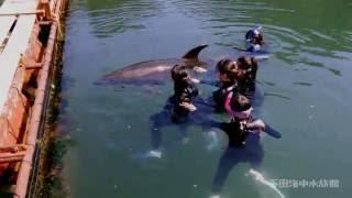 下田海中水族館の人気体験!うきうきドルフィンの様子をご覧ください。 ...