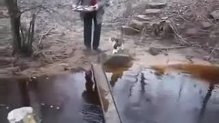 Чтобы лапы не замочить - To paws do not dunk