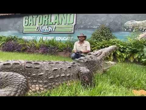 Gatorland's School of Croc Day 28! BONECRUSHER the AMERICAN CROCODILE! - YouTube