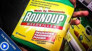 Main Roundup Ingredient Is Unsafe At Nearly ALL Levels thumbnail