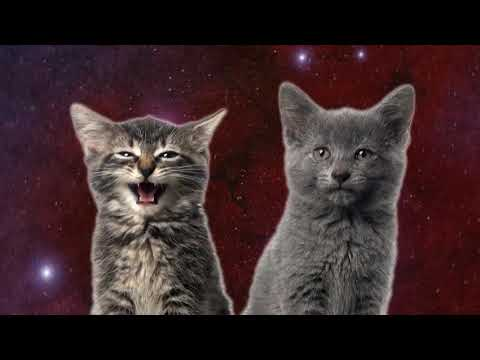 TECHNO CHICKEN    Space Cats  Magic Fly    dog song chicken song