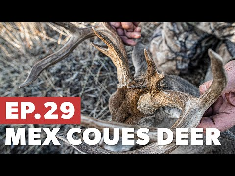 Tom Gets The First Big Buck - Mexico Coues Deer Hunt - The Mountain Project S5|E29