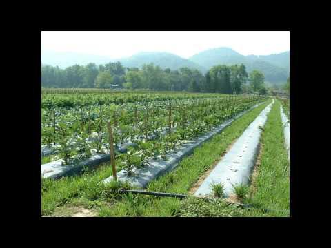 Cane Creek Valley Farm - Eastern Carolina Organics
