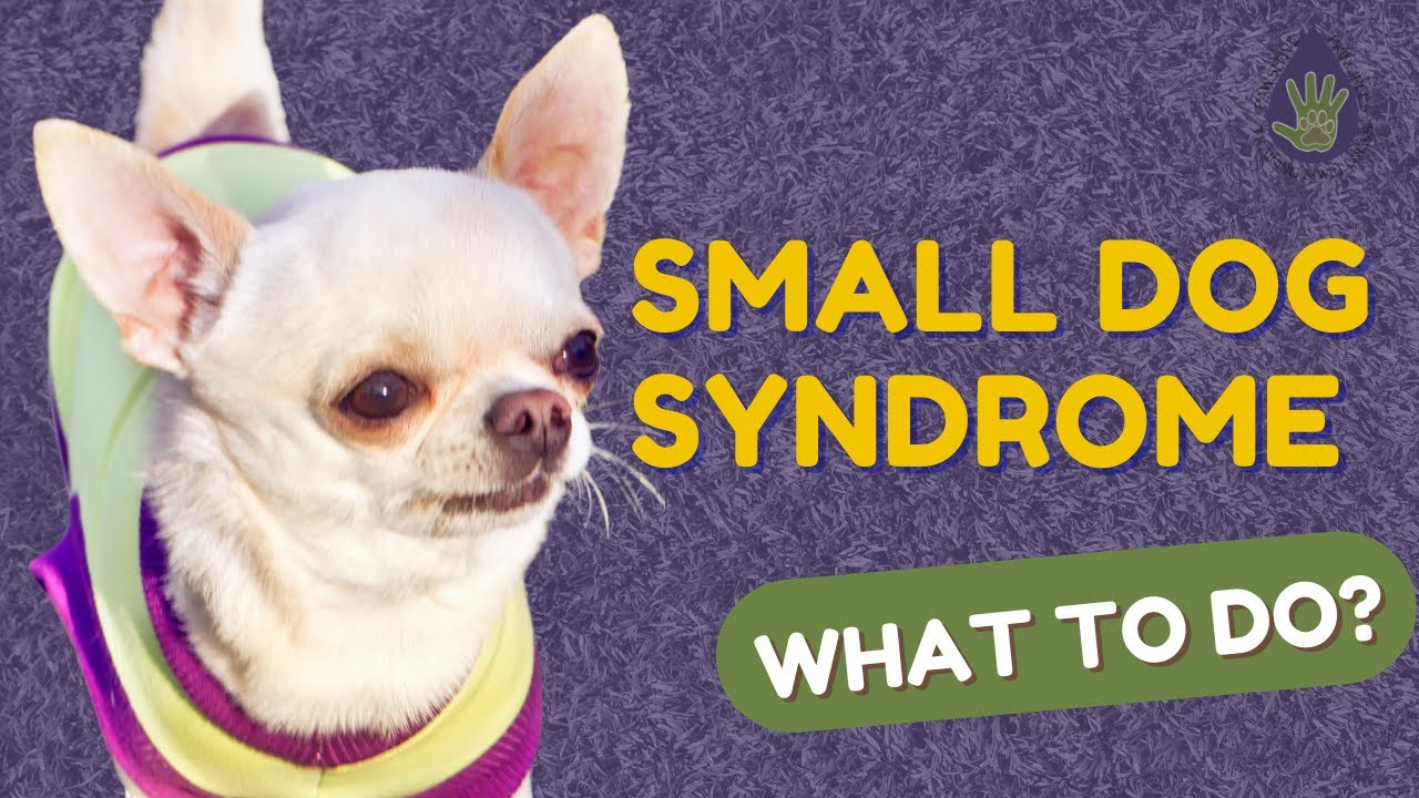 Small Dog Syndrome - What To Do?