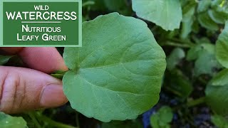 Gambar cover Watercress, A Wild Nutritious Leafy Green