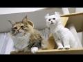 〜猫の日常〜 ちゃちゃ&マロン