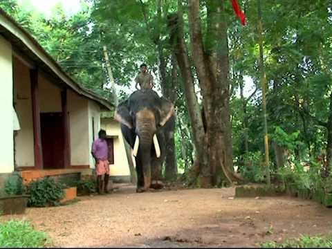 KONNI ELEPHANT CAMP (DOCUMENTARY BY SONY.M.JOSE, GIRI SANKAR