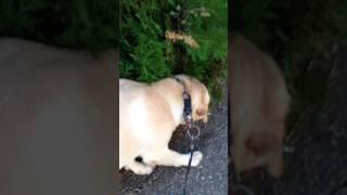 Миша убегает от собаки