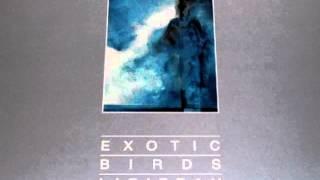 Exotic Birds (L