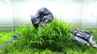George Farmer's Iwagumi Aquascape