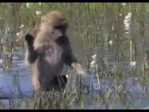 Monkey gif
