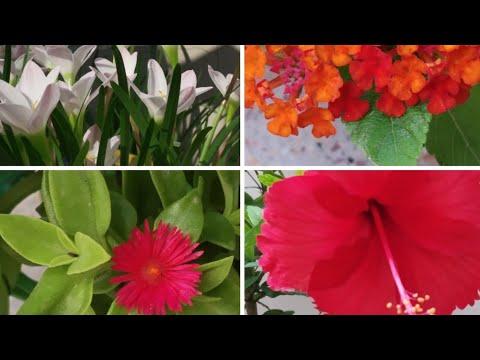 Blooming flowers🌸🌺🌻🌹🌷🌼💐 in my garden # Summer flowering plants