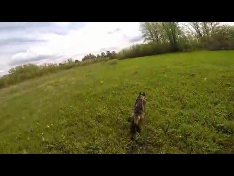 Собака доказала многомерность биомагнитного поля Земли. Следовая работа. Метод Потапова