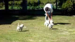 Puppy Aerobics